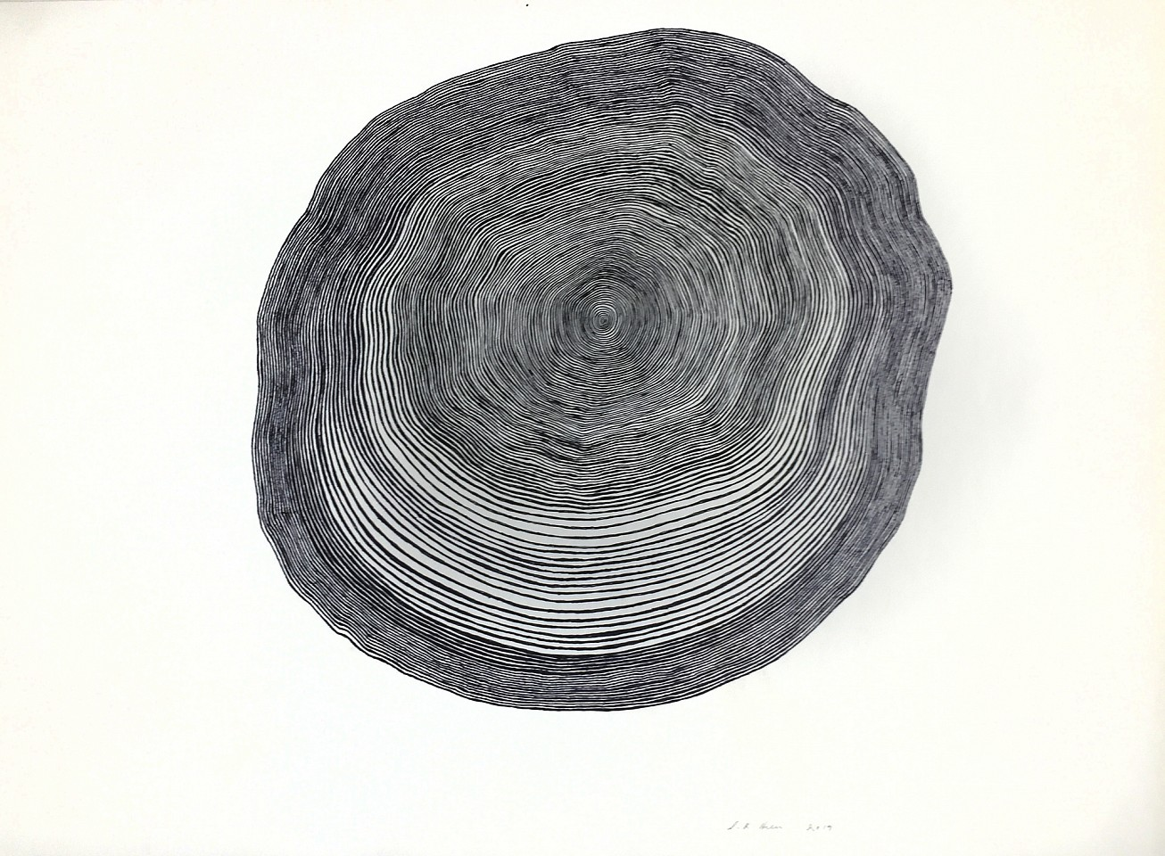 Stewart Helm ,   Black Tree Form, Continuous Line Drawing  ,  2019     colored inks on paper ,  16.5