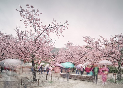 Exhibition: David Burdeny - Travels, Work: Sakura and Umbrellas, Kyoto, Japan, 2018
